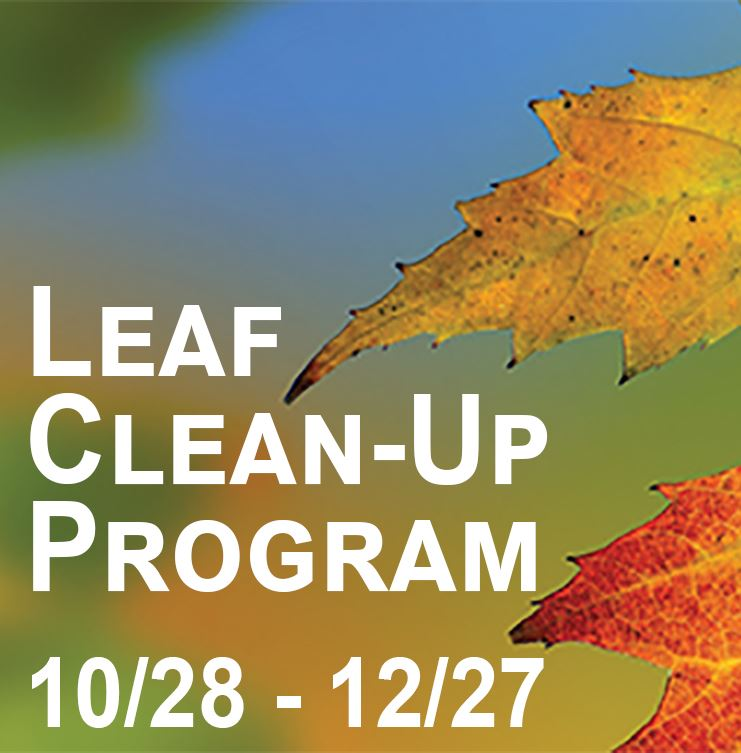 Image of Leaf Cleanup